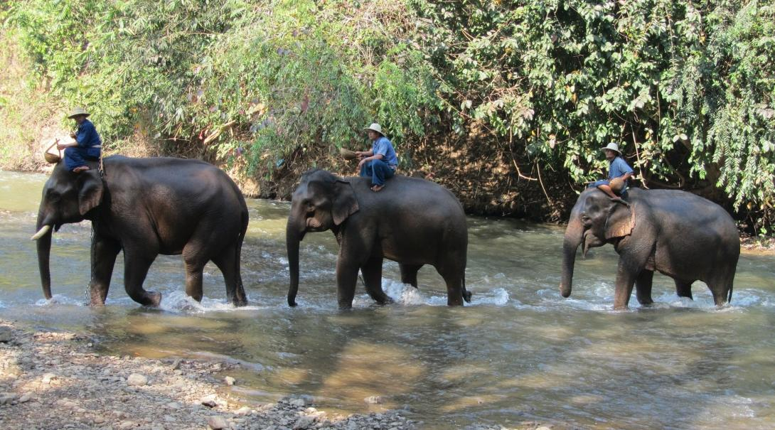 Elephants carry the locals through the forest
